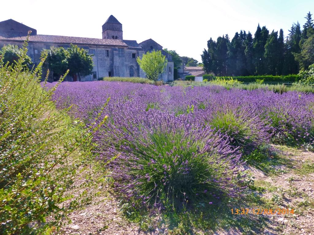 FRANÇA, Saint-Rémy-de-Provence: Saint Paul de Mausole/Vincent Willen Van Gogh