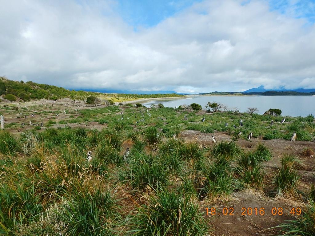 ARGENTINA . USHUAIA . Pinguineira da Ilha Martillo . Canal de Beagle . PASSEIO IMPERDÍVEL!!!