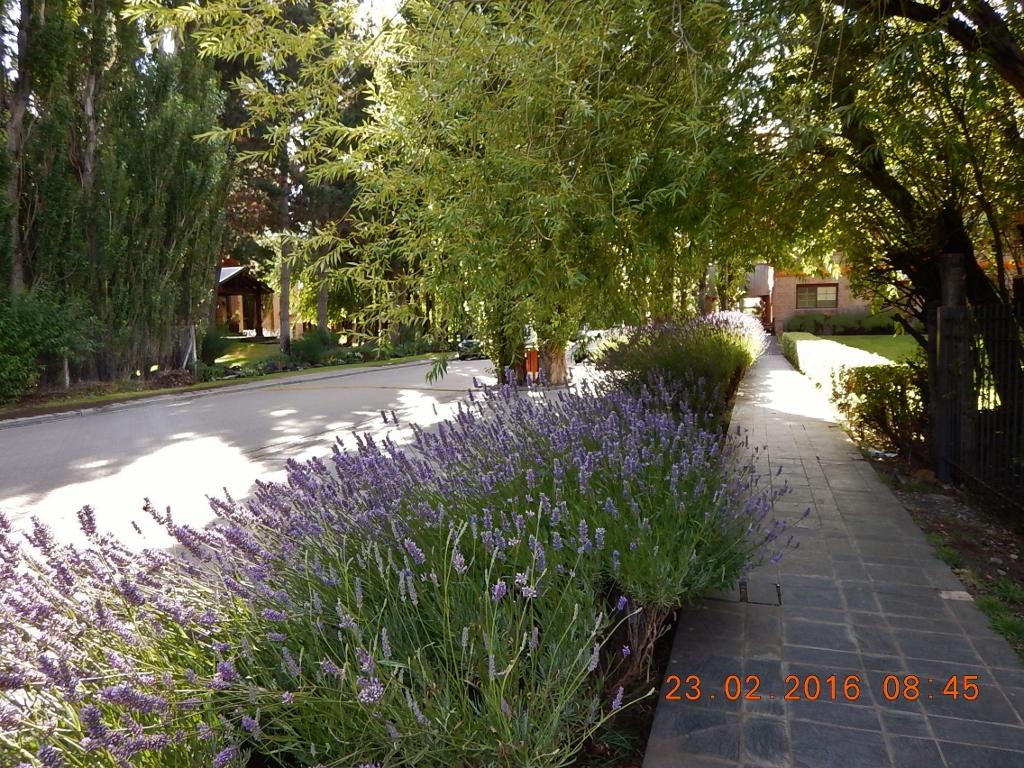 ARGENTINA . EL CALAFATE – Vai Caminhar, Istepô!!